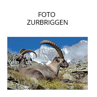 FOTOZURBRIGGEN